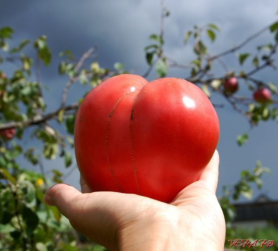 термобелье можно а ткаченко когда завянут помидоры поможет Как