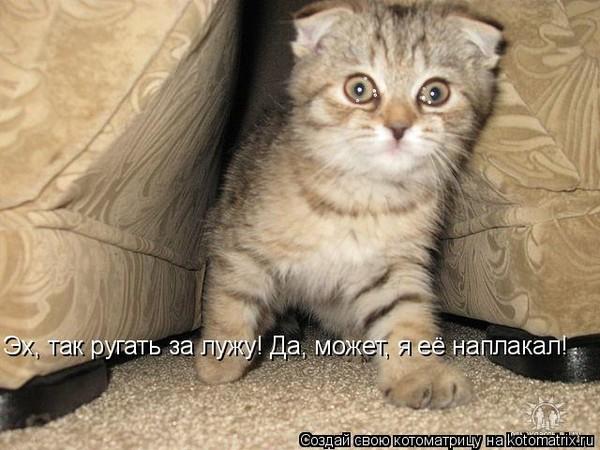 https://otvet.imgsmail.ru/download/cf13500f16b199ff321da0fa7c11e951_i-3191.jpg