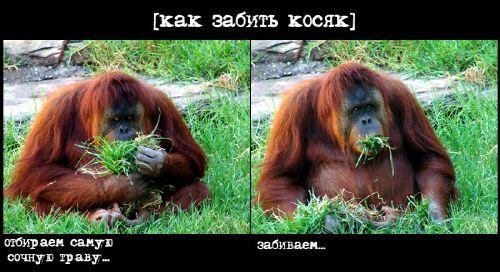 https://otvet.imgsmail.ru/download/cf6cada53cc14f8341b5da856c60816b_i-44.jpg