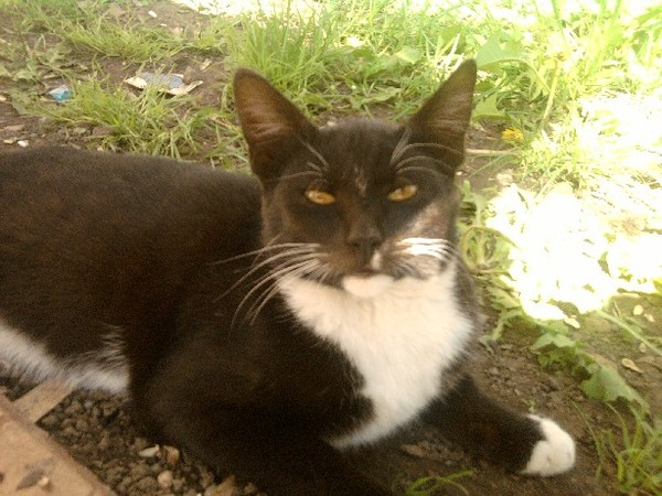flea and tick control for cats walmart