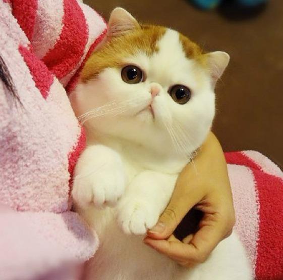 Кот милой породы