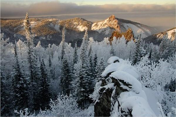 Северный лесной массив