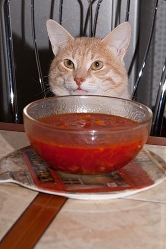 Песня и суп с котом