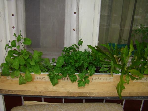 Ответы@mail.ru: как вырастить зелень на подоконнике?.