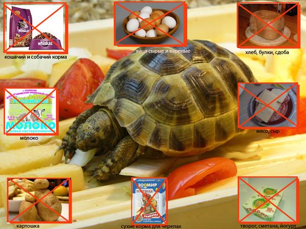 черта холодных черепахи как за ними ухаживать чего нужен