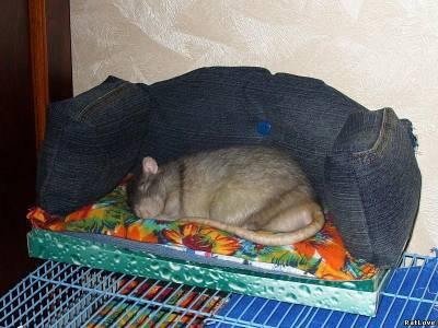 Домик для крысы как сделать