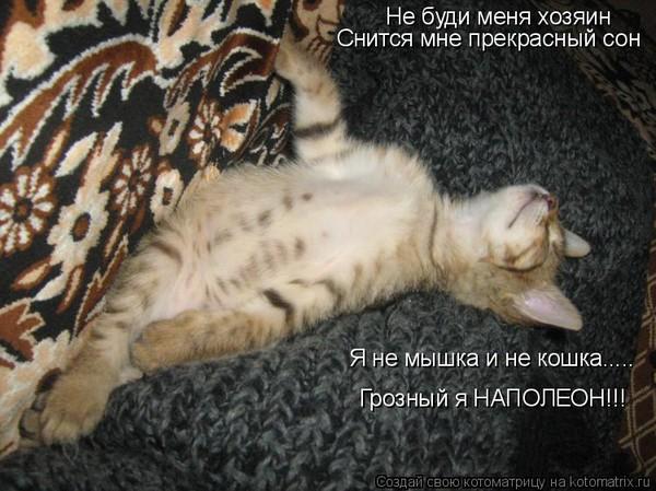 К чему сниться шипит кошка во сне