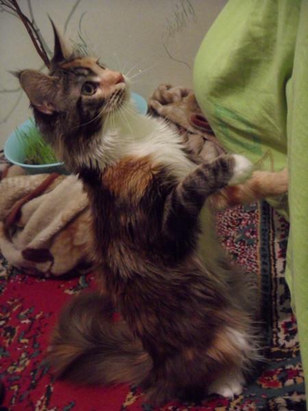 Мухин беременная кошка пришла в дом приметы вас