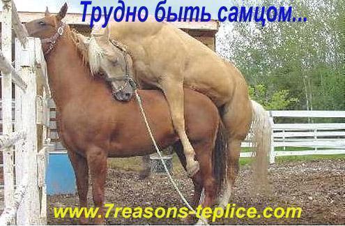 """Свободовец Кривецкий подтвердил, что был на дне рождения экс-регионала Онищенко: """"Я, как и он, занимаюсь конным спортом"""" - Цензор.НЕТ 1330"""