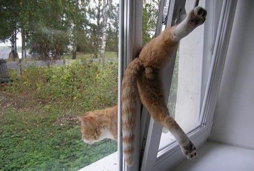 Кот лезет фото