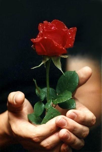 Можно ли девушке дарить одну розу