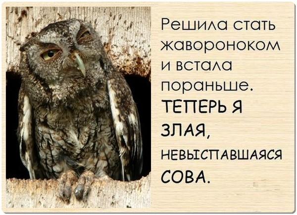 теперь я злая невыспавшаяся сова картинка