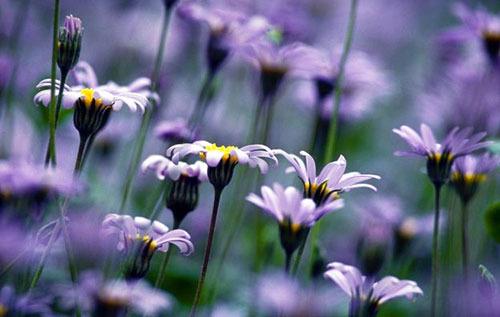 Какие есть полевые цветы