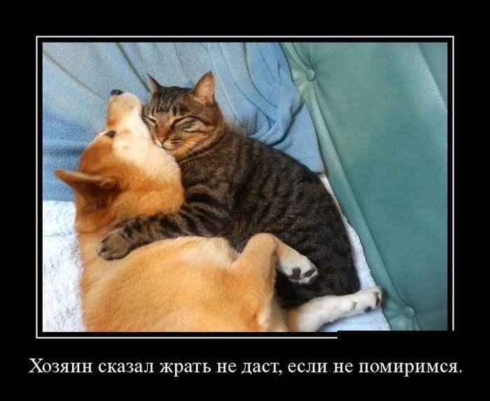 Какие коты дружат с собаками