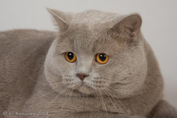 Фото умные коты
