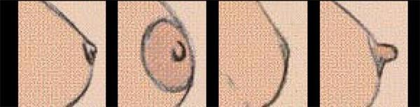 форма женских сосков фото