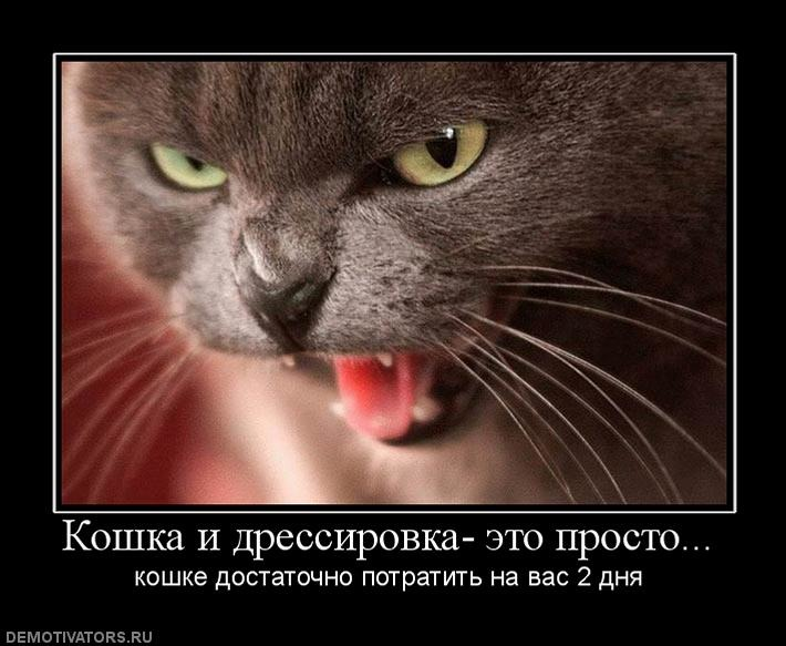 Как натренировать кота