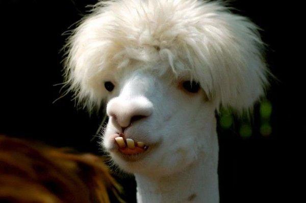 достигается смешные фото зверей на аватарку белья