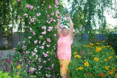 Когда можно сажать розу плетистую 385