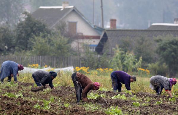 Ответы Mail.ru: Вся Беларусь стоит раком (копка картошки), им не до  политики:((( Какой труд тяжелее, чем сельхоз без механизации?