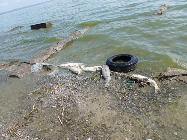 также особенности азовского моря для купания обеспечивает высокий