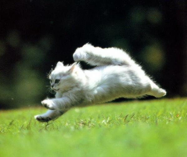 картинка кот бежит на работу красная