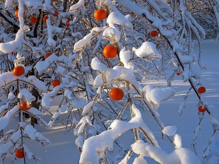Картинки красивые снег идет с добрым утром будут представлены