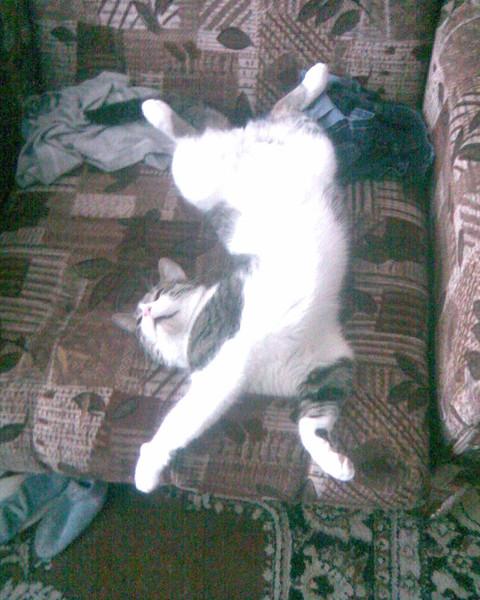 Кот прячет нос когда спит к чему