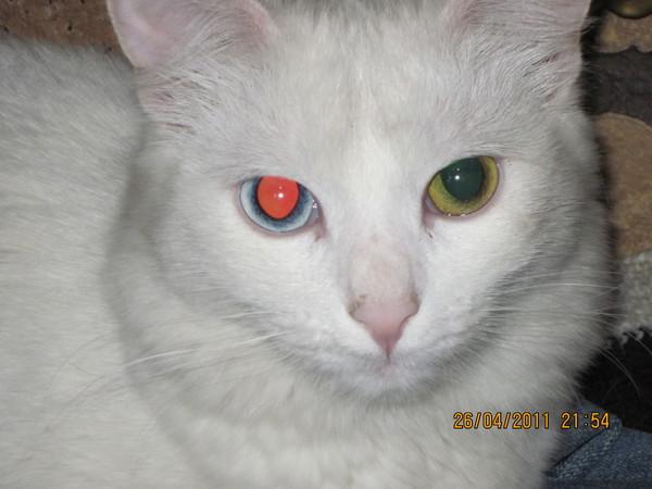 Как коты слепнут
