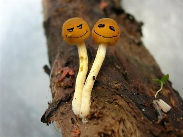календарь, луна можно ли курить грибы ПОПАДАНЦАХ