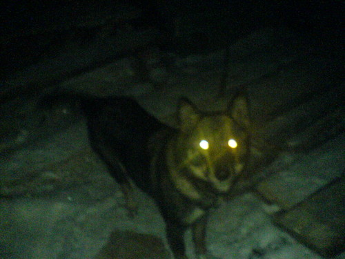 """discuss why animal eyes glow green Completed project next post: define the term """"alter-ego"""" and list the elements the court considered when determining whether to pierce the corporate shield."""