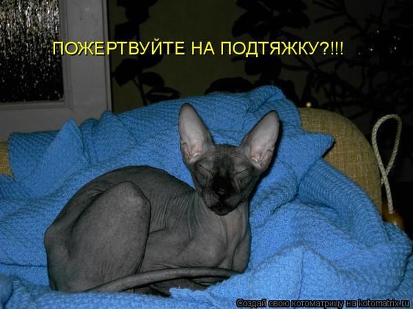 Кот За Неделю Похудел.
