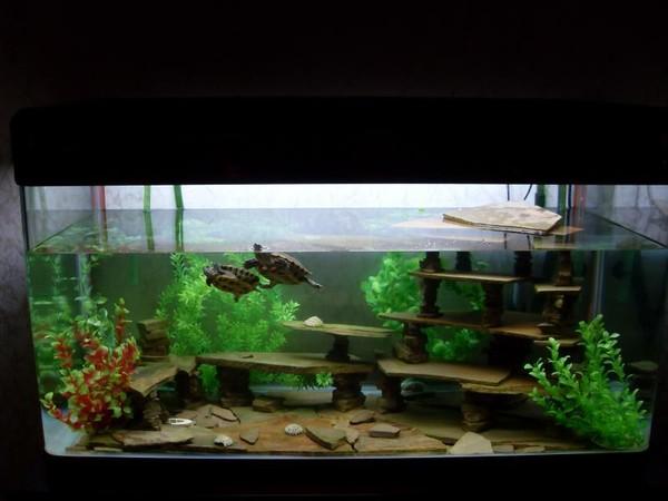 Как обустроить акватеррариум для водных черепах - Черепахи 15