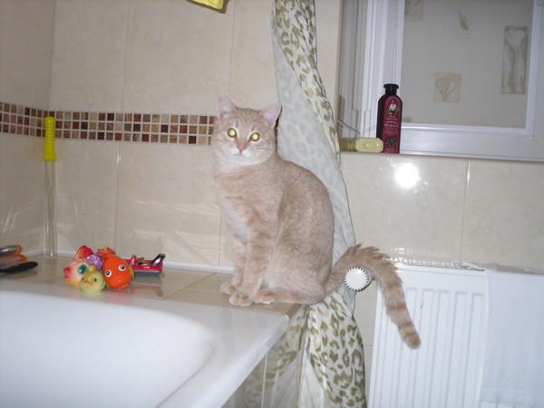 если кот убежал из квартиры удобный