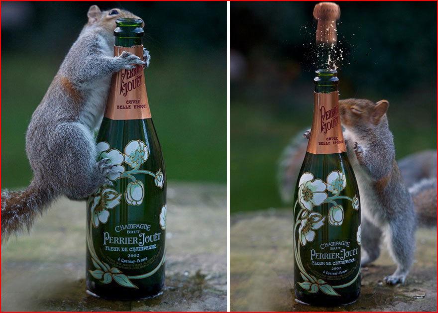 Иваново вознесенская, смешные картинки про шампанское