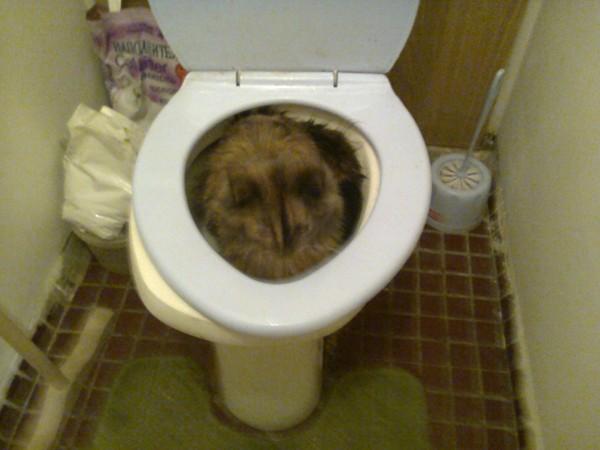 Апартаментами сургуте фото из дырки туалета русские женщины
