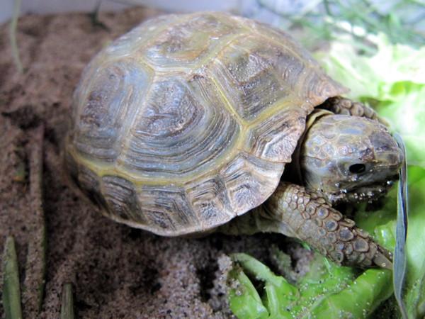 визитки спячка черепах в картинках июне, плоды