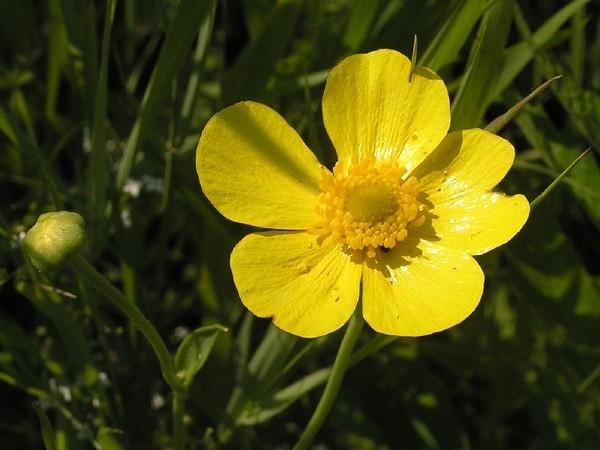 Открытки полевые цветы в букетах фото тебе