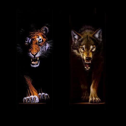 фото белые тигр и волк