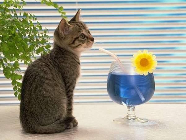Весенние обострение котов