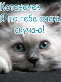Открытки можно, открытки котенок я по тебя скучаю