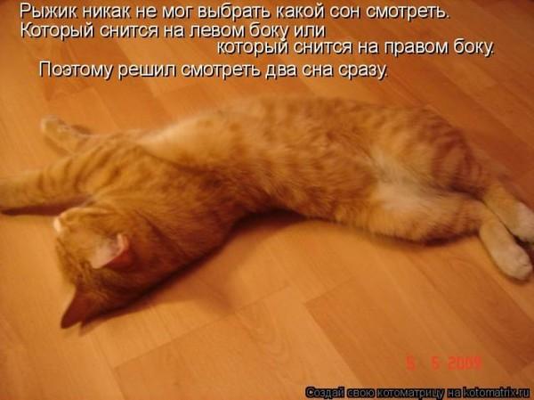 Наши эксперты помогут вам узнать к чему снится говорящая кошка во сне, просто напишите сновидение в форму ниже и вам растолкуют что значит, если во сне видели данный символ.