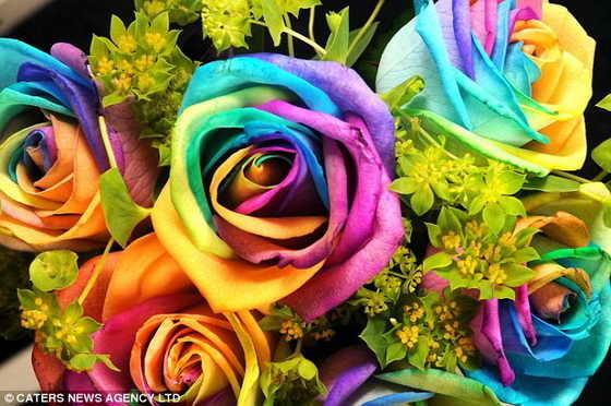 Розы каких цветов бывают фото