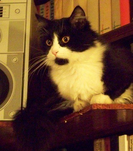 Имя черно-белому коту