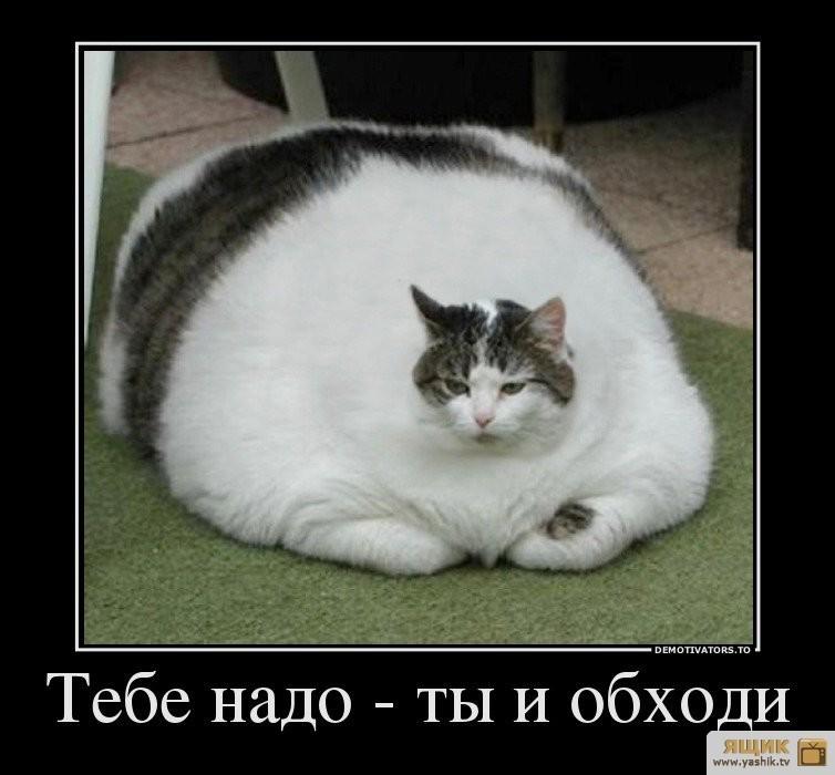 sodium bentonite cat litter
