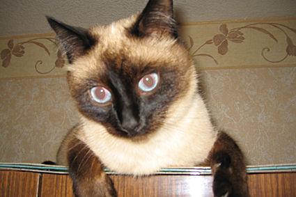 Когда кастрировать кота в 4 месяца