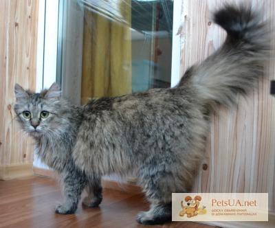 Порода котов дворняга