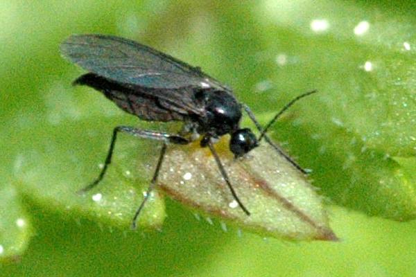 В доме появились черные мухи