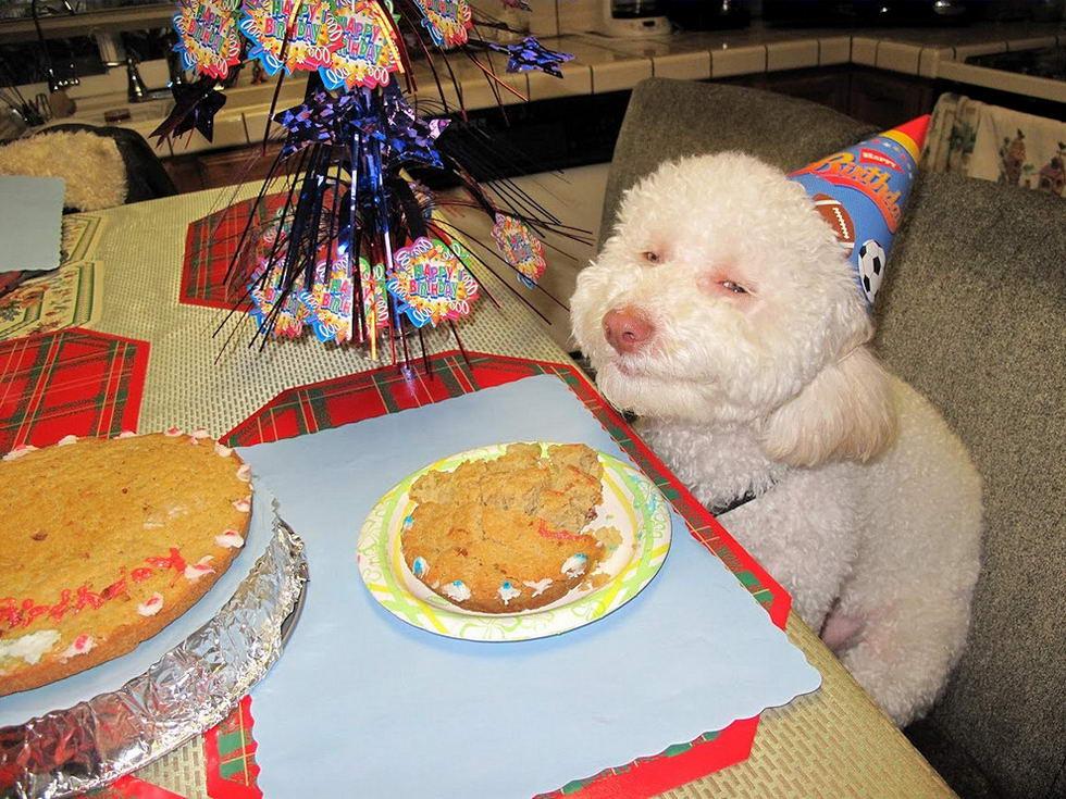Смешные картинки с надписями до слез день рождения