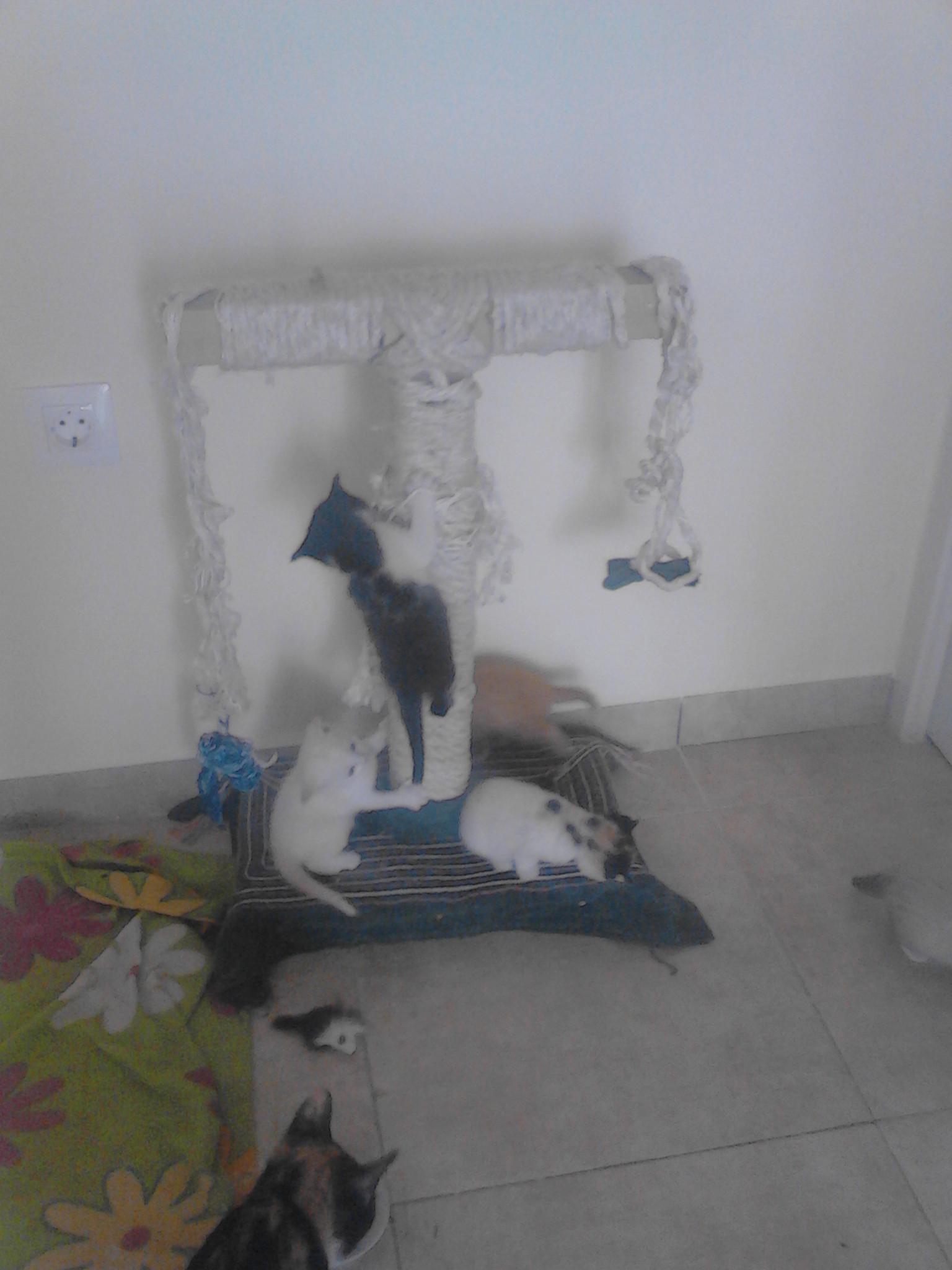 Чем обработать диван от кота